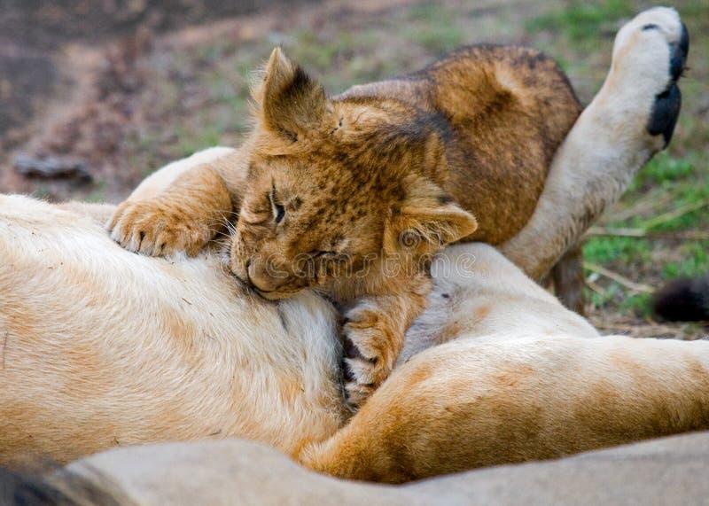 雌狮和她的崽在一个大岩石 国家公园 肯尼亚 坦桑尼亚 mara马塞语 serengeti 库存照片