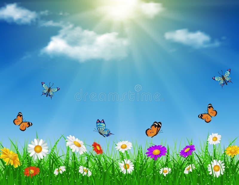 雏菊传染媒介背景夏天设计 向量例证