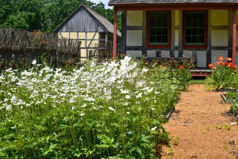 雏菊和鸦片、平方英尺庭院、德国议院和谷仓 库存图片