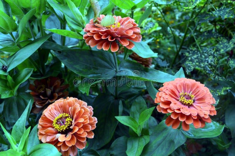 雏菊在阿拉斯加 库存图片
