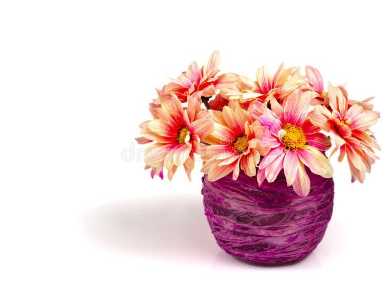 雏菊桃红色紫色花瓶 库存图片