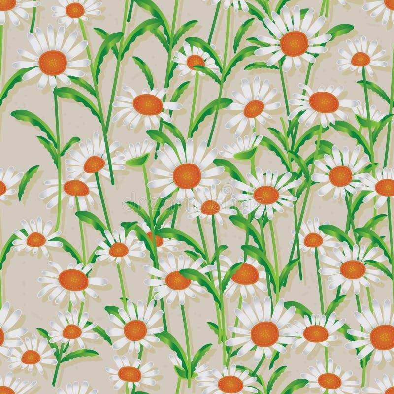 雏菊白色无缝的样式 库存例证