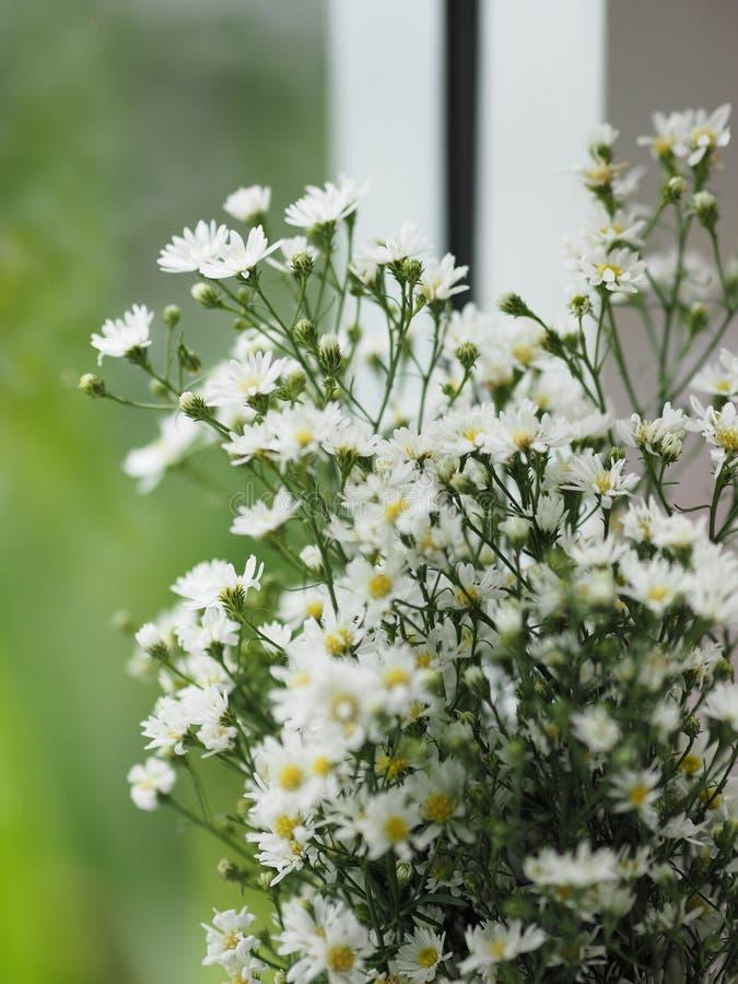 雏菊白花花束美丽在弄脏自然背景 免版税库存图片