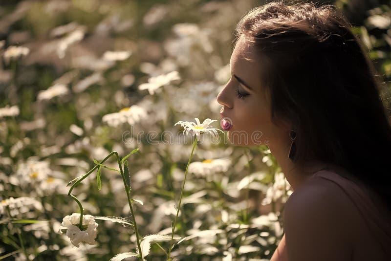 雏菊的美好的女孩和领域 库存图片