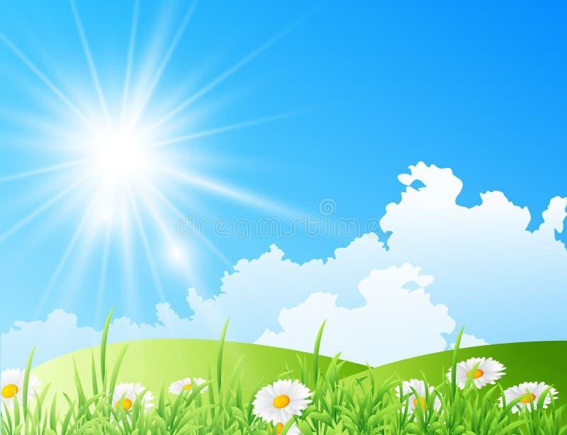 雏菊的领域与明亮的太阳的 免版税库存图片