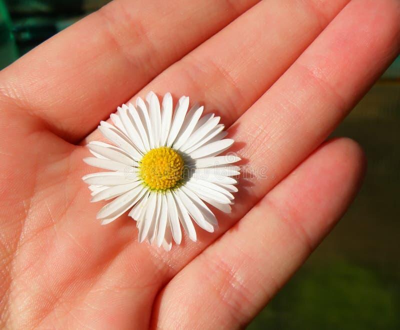 雏菊精密详细资料的现有量 库存图片