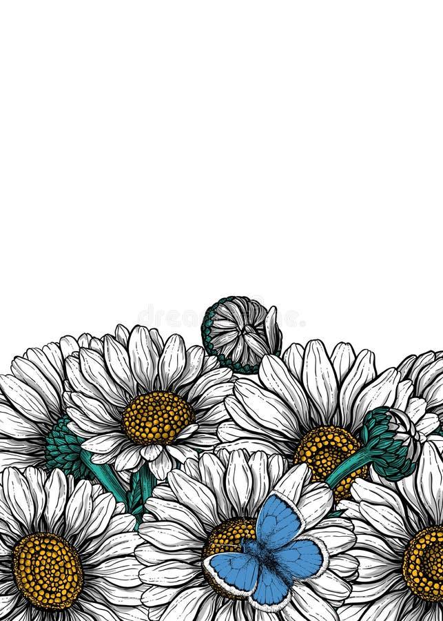 雏菊花和共同的蓝色蝴蝶卡片 库存例证