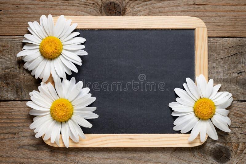 雏菊花和黑板 图库摄影