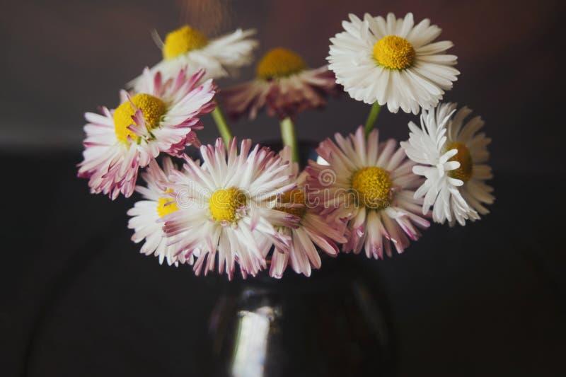 雏菊花束在一个棕色陶瓷花瓶的,反对黑暗的背景,特写镜头 图库摄影