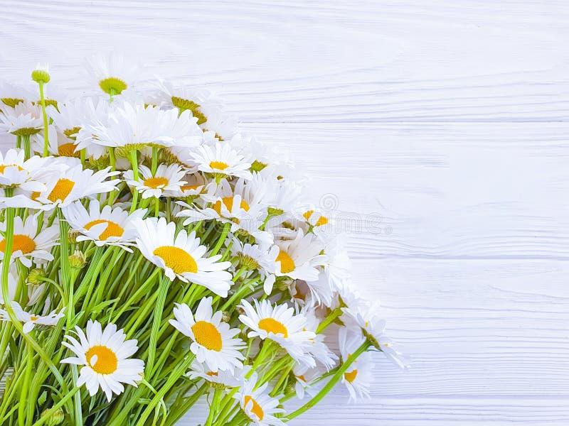 雏菊花束每木背景春天 库存照片