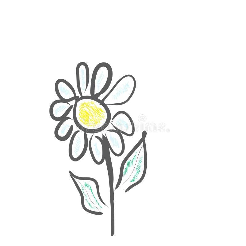 雏菊花,传染媒介图象 库存例证