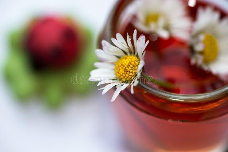 雏菊细节在玻璃开花用红色医药不老长寿药和三叶草与瓢虫 库存图片