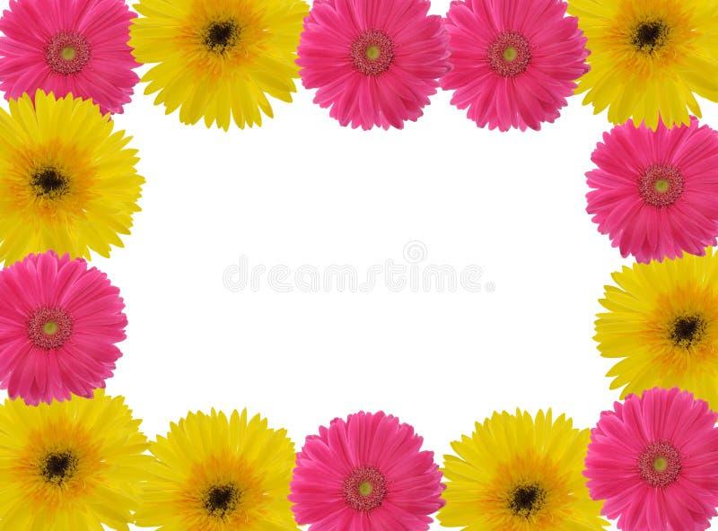 雏菊gerber红色黄色 免版税库存照片