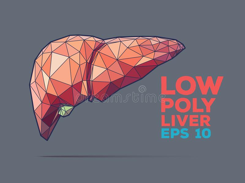 雕琢平面的肝脏多 库存例证