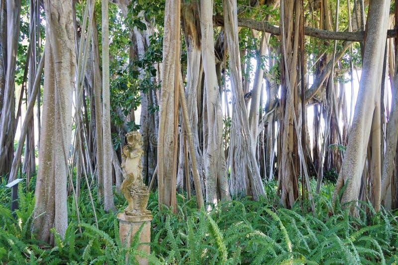 雕象和榕属树在约翰Ringling博物馆,萨拉索塔, FL 免版税库存照片
