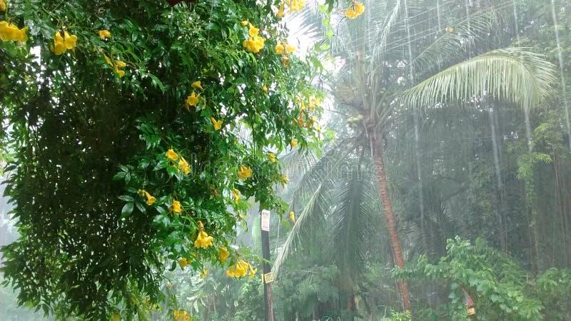 雨在喀拉拉 免版税图库摄影