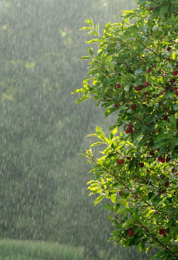 雨夏天 库存图片