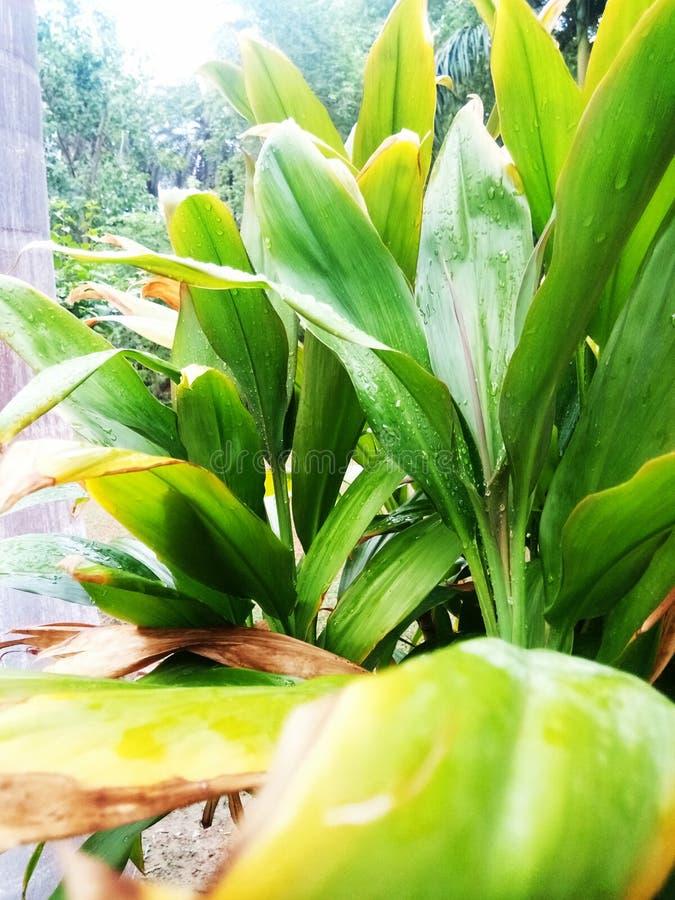 雨天II 图库摄影
