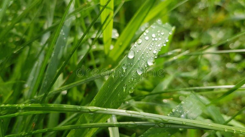 雨小滴发光在阳光在草叶 免版税图库摄影
