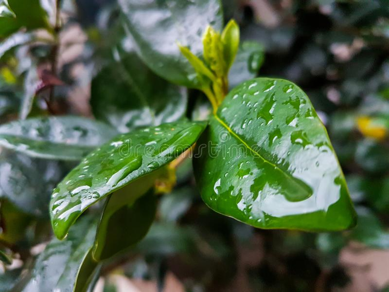 雨投下水叶子玻璃路 库存照片