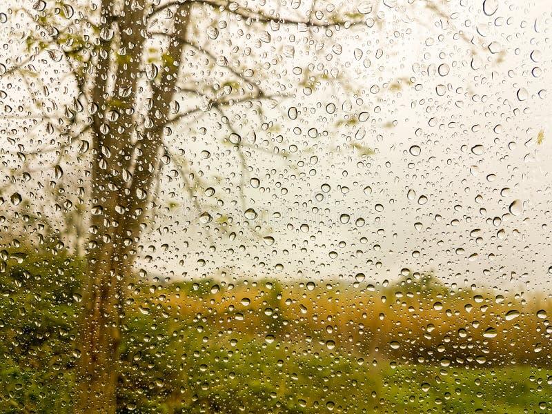 雨投下水叶子玻璃路 库存图片