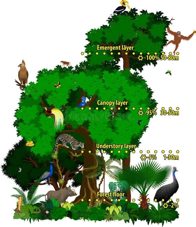 雨林印度尼西亚密林分层堆积传染媒介例证 向量例证