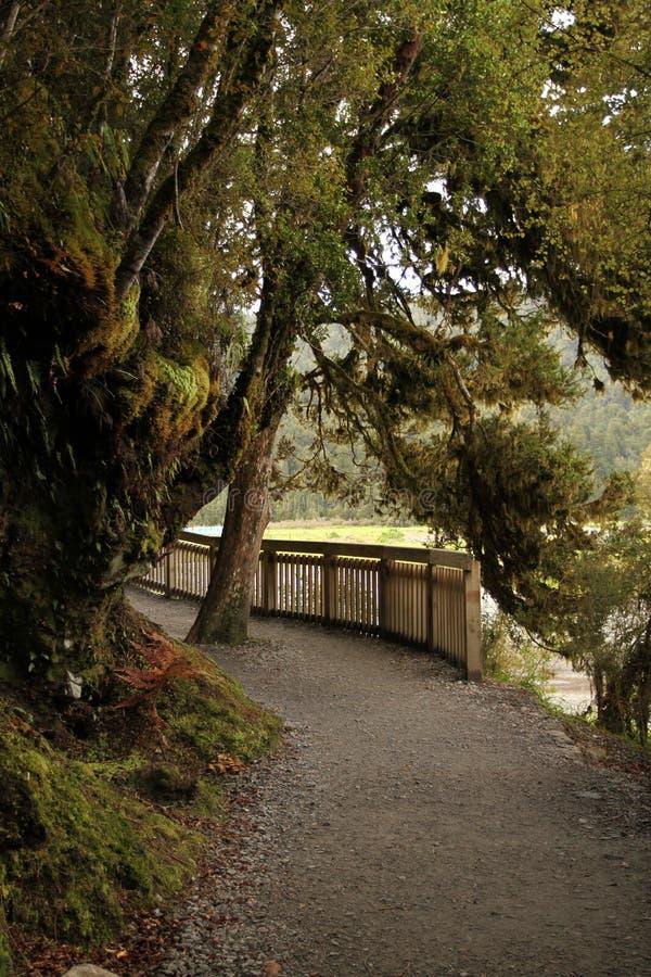 雨林和湖走的轨道在南岛,新西兰 免版税图库摄影