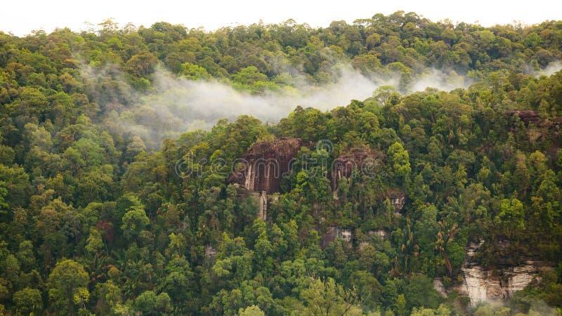 雨林小山视图 库存照片