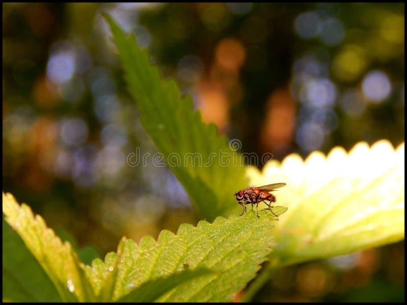 雨林居民2 免版税库存图片