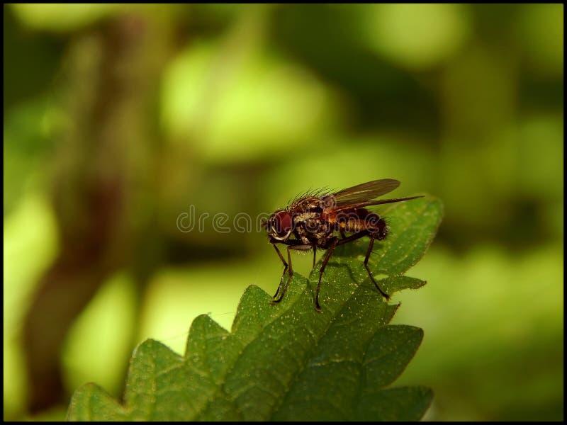 雨林居民3 库存图片
