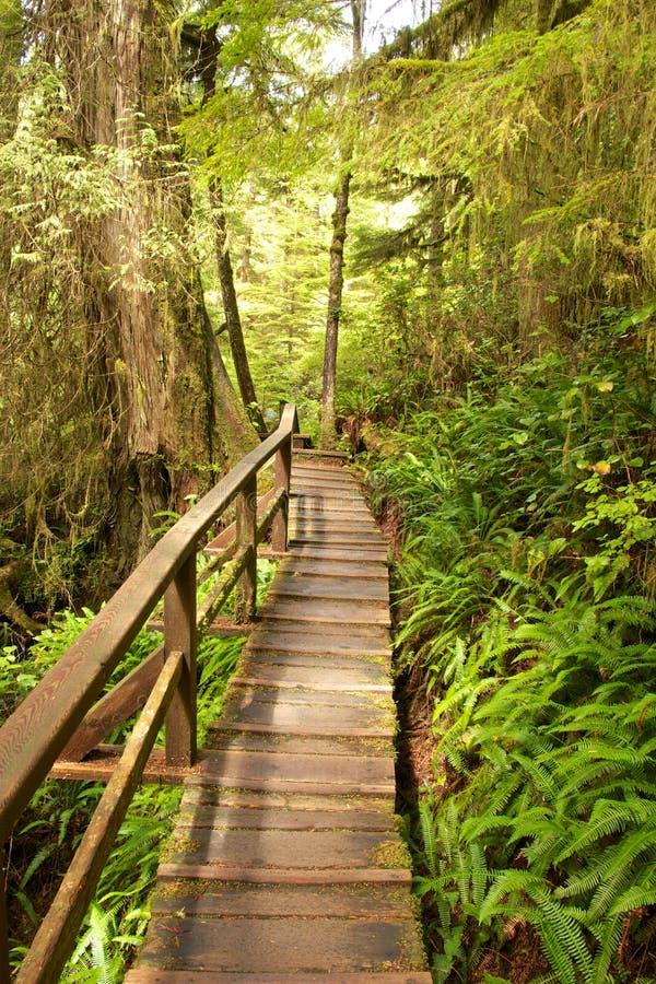 雨林木板走道2 免版税库存照片