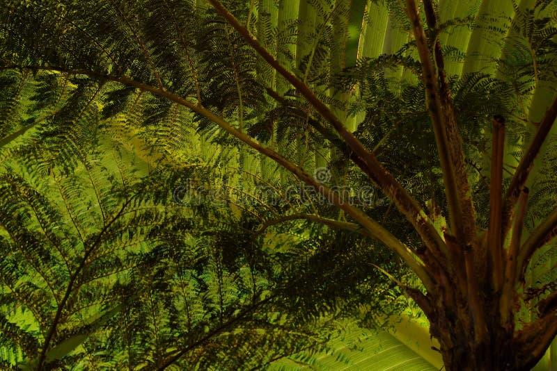 雨林机盖树蕨纹理 免版税库存图片