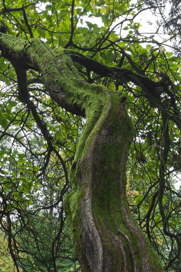 雨林树 图库摄影