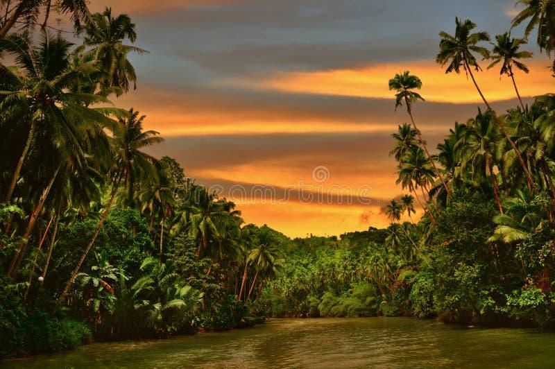 雨林河日落 库存照片