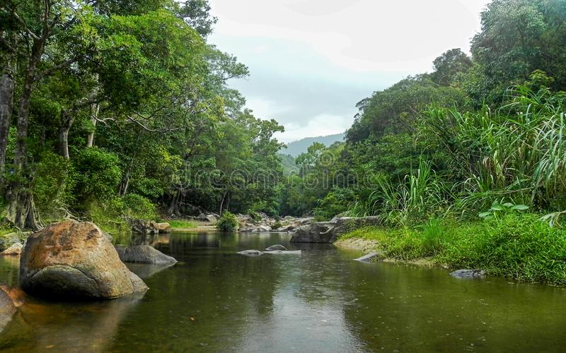 雨林的河 库存图片