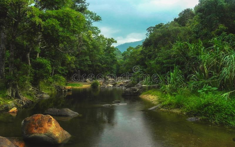 雨林的河 免版税图库摄影