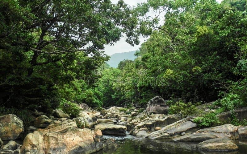 雨林的河 库存照片