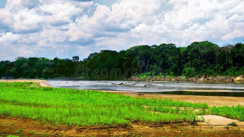 雨林的河 图库摄影