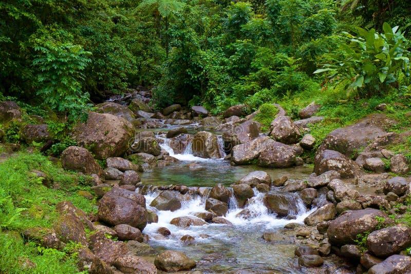 雨林自然,马提尼克岛 免版税库存照片