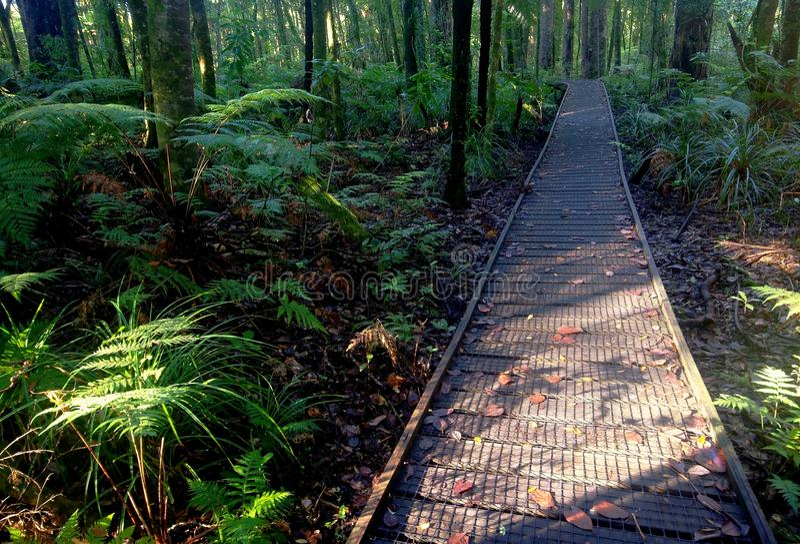 雨林路 库存图片
