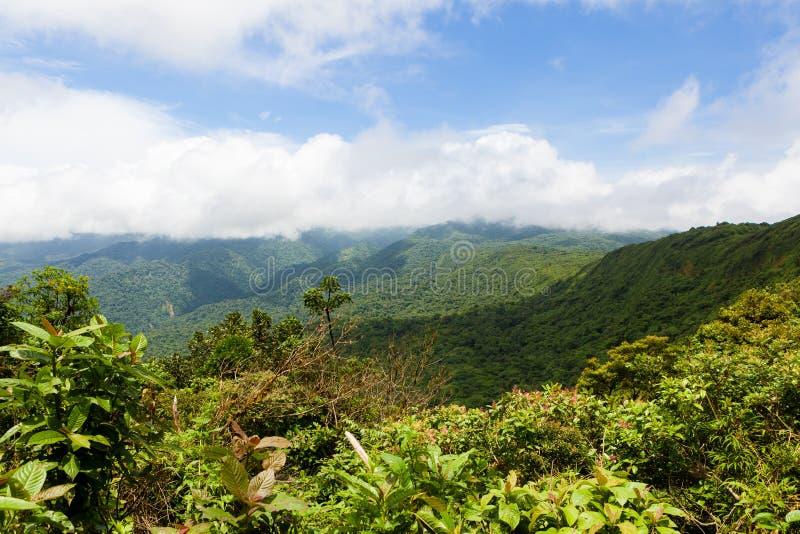 雨林风景在Monteverde哥斯达黎加 免版税库存图片