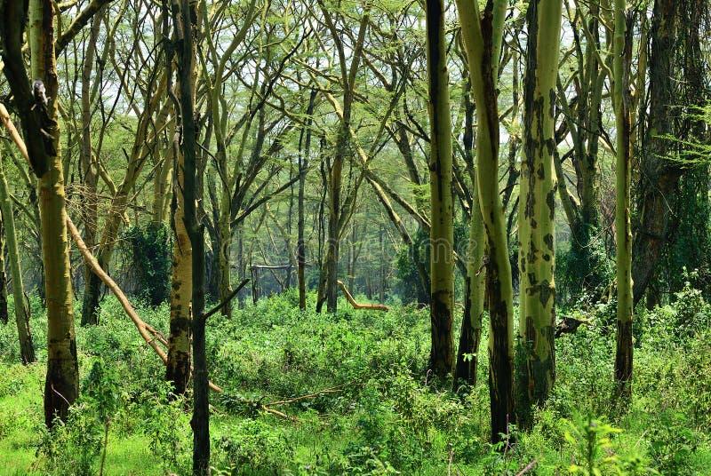 雨林,坦桑尼亚,非洲 库存照片