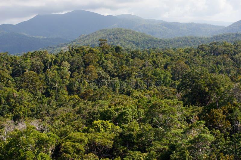 雨林 免版税库存照片