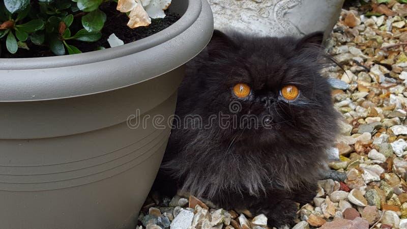 雨果猫 库存图片
