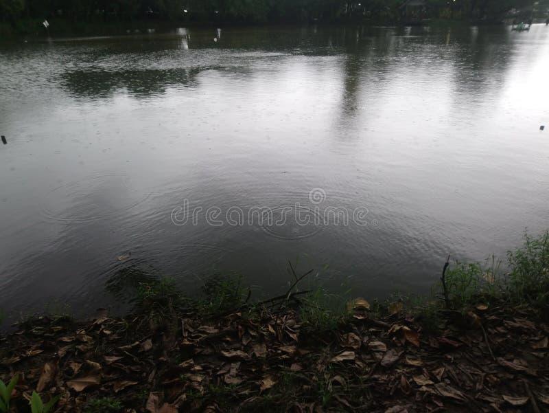 雨水坑 库存图片