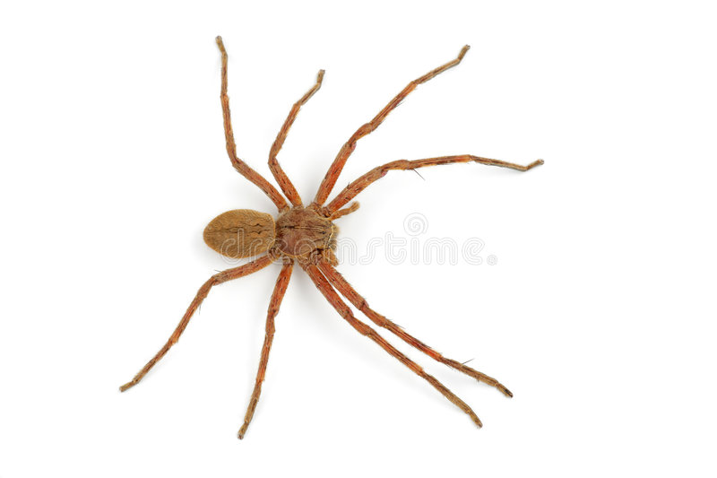 雨蜘蛛 库存图片