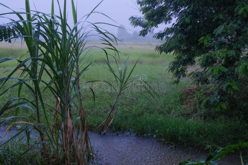 雨领域的结构特征 FrÐ ¹ dÐ ¹ ric Mesnard Laboratoire de Physique de l `关于Tropicale的Atmosphe ` 免版税图库摄影