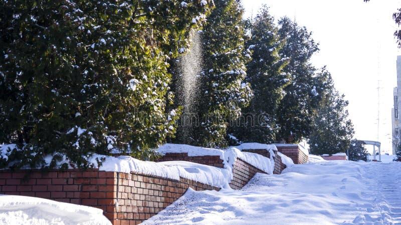 雪倾吐从树的小雪花 库存图片