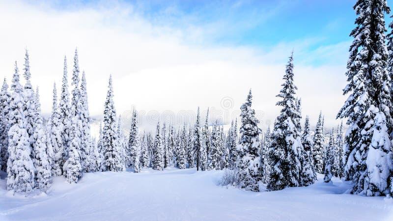 滑雪倾斜和一个冬天环境美化与在滑雪小山的积雪的树在太阳峰顶附近村庄  免版税库存照片