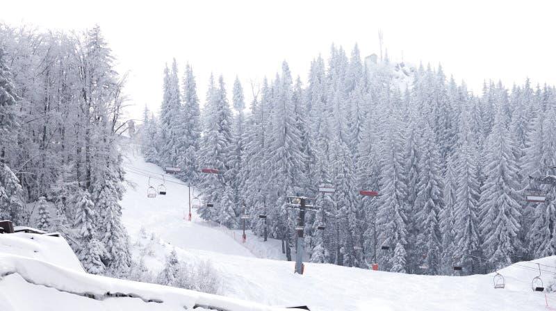滑雪倾斜,山Jahorina 库存图片